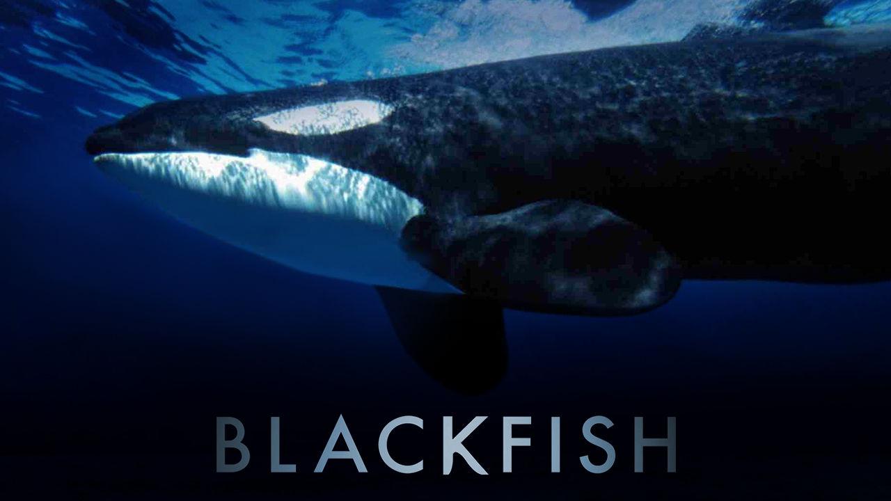 blackfish netflix documentary seaward